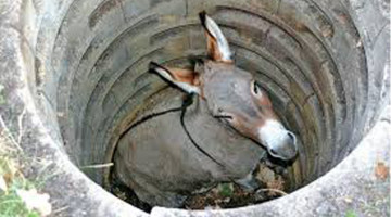 Perseverance: A Donkey in the Well